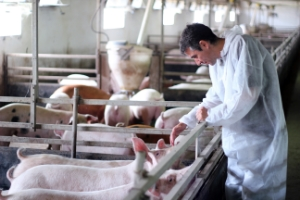 Veterinary Diagnostics: Disease Threats to Animals Continues to Boost Need for New Tests