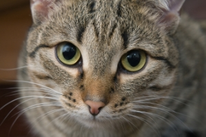 Premiumization Trends Drive Cat Food Sales in Canada