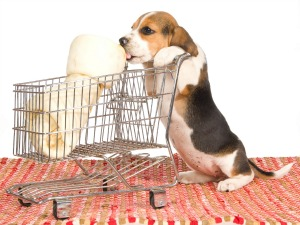 The U.S. Pet Market's Emphasis on Natural & Organic