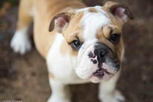 Projected 2015 Trends in the Pet Industry