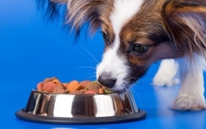 dog food goes digital, featured on www.blog.marketresearch.com