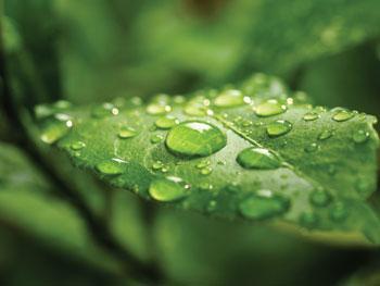 Consumer Attitudes Toward Green Brands Reach All-Time High