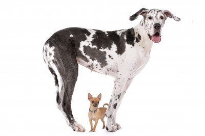 Large dog and small dog