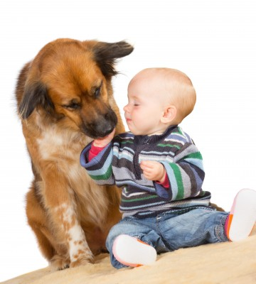 Baby petting a dog