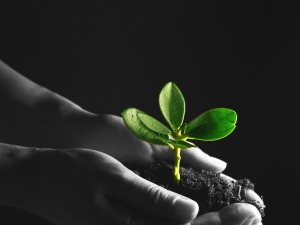 Hands holding soil and sprouting plant, featured on MarketResearch.com www.blog.marketresearch.com