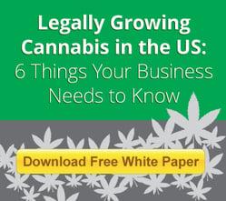 growing cannabis 101