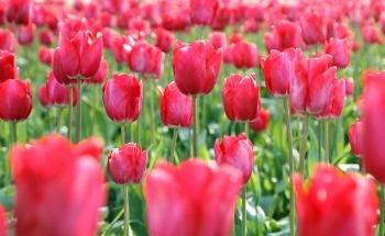 home and garden pesticides_350.jpg