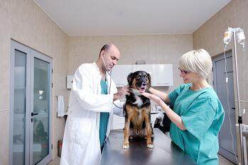 veterinary services industry