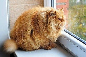 Overweight Cats and Dogs: A Heavy Burden for Pet Owners