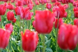 The Increasing Demand for Home & Garden Pesticides